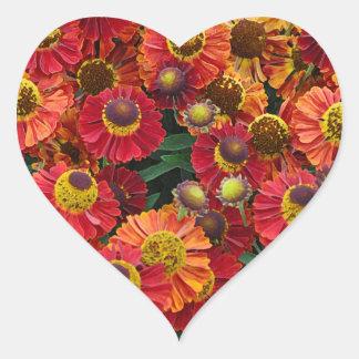 Adesivo Coração Flores vermelhas e alaranjadas do helenium