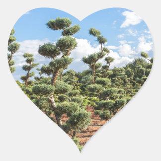 Adesivo Coração Formas bonitas do topiary nas coníferas