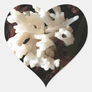 Adesivo Coração Fungo coral do marfim