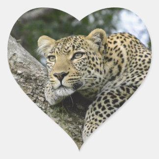 Adesivo Coração Gato selvagem animal do safari de África da árvore