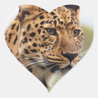 Adesivo Coração Gatos selvagens do leopardo