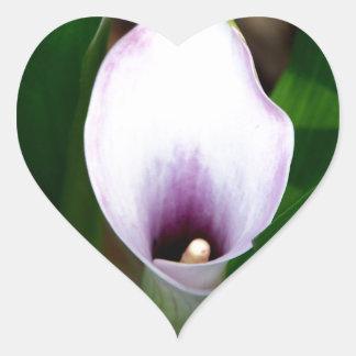 Adesivo Coração Lírio de Calla branco e roxo