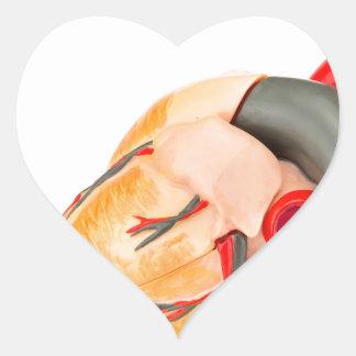 Adesivo Coração Modelo humano do coração isolado no fundo branco