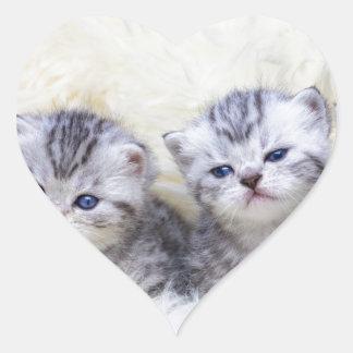 Adesivo Coração Ninho com os quatro gatos de gato malhado novos em