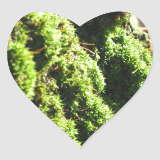 Adesivo Coração O musgo verde no detalhe da natureza de musgo