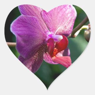 Adesivo Coração Orquídea mágica