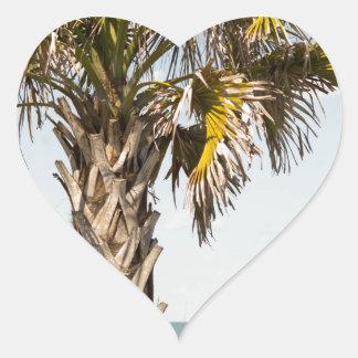 Adesivo Coração Palmeiras no passeio à beira mar da costa leste de