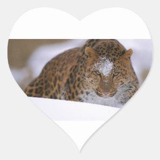 Adesivo Coração Pares raros de um leopardo de Amur sobre uma