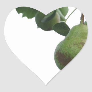 Adesivo Coração Peras verdes que penduram em uma árvore de pera