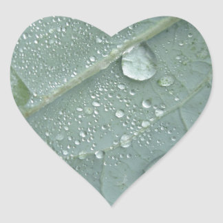 Adesivo Coração Pingos de chuva nas folhas da couve-flor