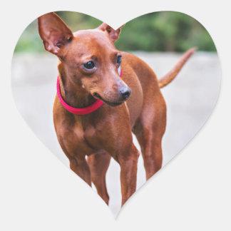 Adesivo Coração Retrato do cão vermelho do pinscher diminuto