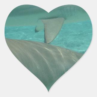 Adesivo Coração shark