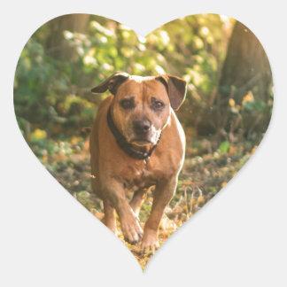 Adesivo Coração Staffordshire bull terrier