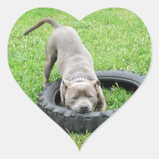 Adesivo Coração Staffordshire bull terrier, um Chomp,