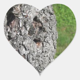Adesivo Coração Tronco de árvore da pera contra o fundo verde
