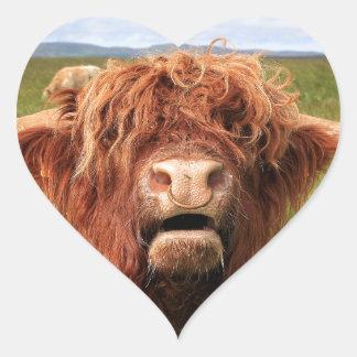 Adesivo Coração Vaca escocesa das montanhas, Scotland