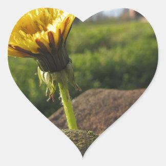 Adesivo Coração Wildflower amarelo que cresce em pedras no por do