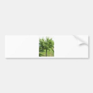 Adesivo De Para-choque Árvore de pera com folhas do verde e frutas