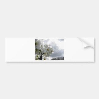 Adesivo De Para-choque Árvore de pera de florescência contra o céu