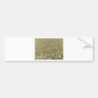 Adesivo De Para-choque Campo do milho do milho verde na fase inicial