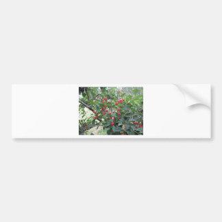 Adesivo De Para-choque Cerejas vermelhas de Montmorency na árvore no