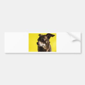 Adesivo De Para-choque chihuahua