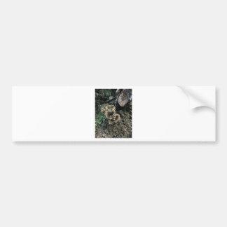 Adesivo De Para-choque Cogumelos de florescência