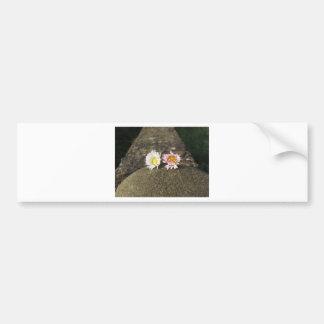 Adesivo De Para-choque Duas margaridas brancas que encontram-se na pedra