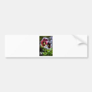 Adesivo De Para-choque Duo da flor do amor perfeito do Bordéus