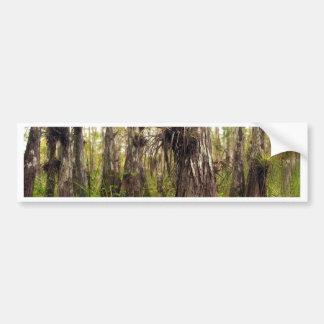 Adesivo De Para-choque Epiphyte Bromeliad na floresta de Florida