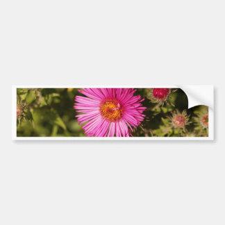 Adesivo De Para-choque Flor de um áster de Nova Inglaterra