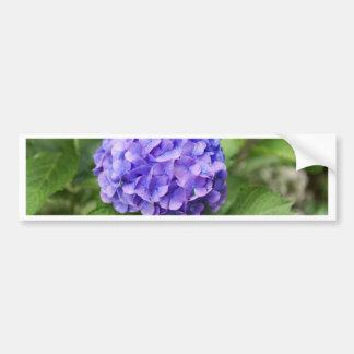 Adesivo De Para-choque Flores de um hydrangea do francês (macrophyl do