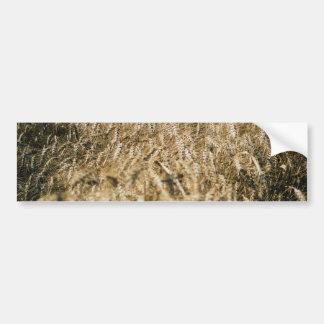 Adesivo De Para-choque Foto da fazenda do close up do campo de trigo do