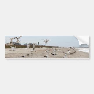 Adesivo De Para-choque Gaivotas que voam, estando e comendo na praia