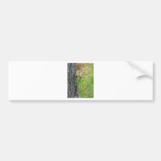 Adesivo De Para-choque Galho da árvore de pera com os botões no primavera