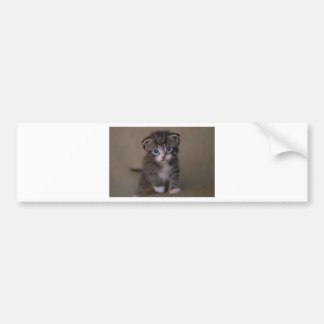 Adesivo De Para-choque gatinho