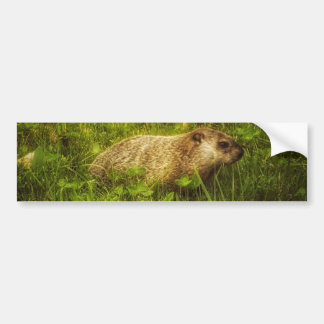 Adesivo De Para-choque Groundhog em um autocolante no vidro traseiro do