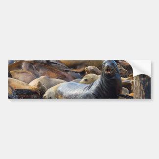 Adesivo De Para-choque Leões de mar na doca de flutuação em San Francisco