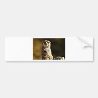 Adesivo De Para-choque Meerkat