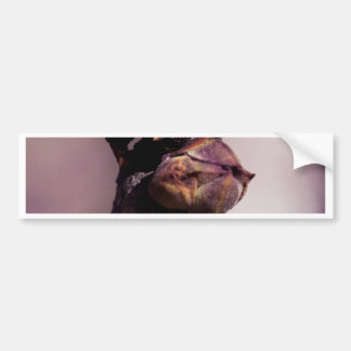 Adesivo De Para-choque O botão do Lilac