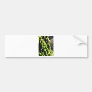 Adesivo De Para-choque O musgo verde no detalhe da natureza de musgo