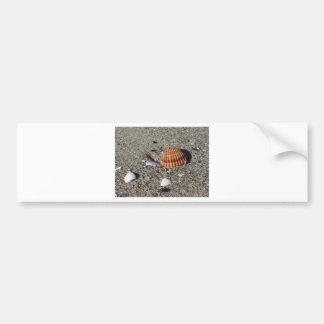 Adesivo De Para-choque Os Seashells no verão da areia encalham a opinião