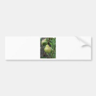 Adesivo De Para-choque Peras verdes que penduram em uma árvore de pera