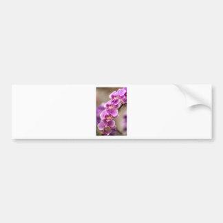 Adesivo De Para-choque Profundamente - corrente de flor cor-de-rosa da