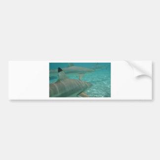 Adesivo De Para-choque shark