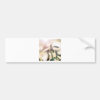 Adesivo De Para-choque Snowdrop 01.01q lírico