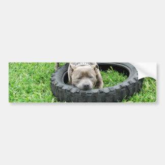 Adesivo De Para-choque Staffordshire bull terrier, um Chomp,