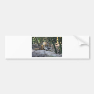 Adesivo De Para-choque Tigre
