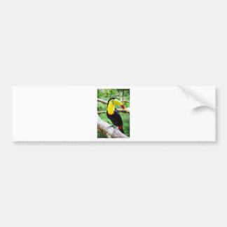 Adesivo De Para-choque Toucan bonito
