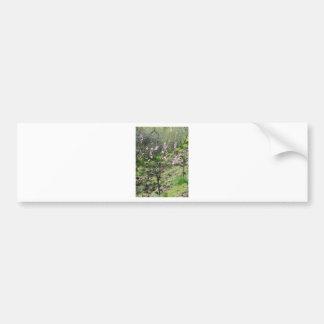 Adesivo De Para-choque Única árvore de pêssego na flor. Toscânia, Italia